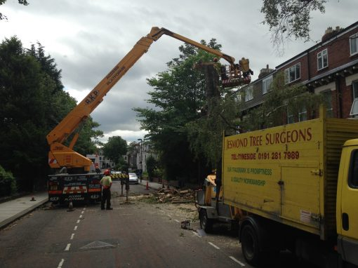 Residential Tree Removal – Newcastle