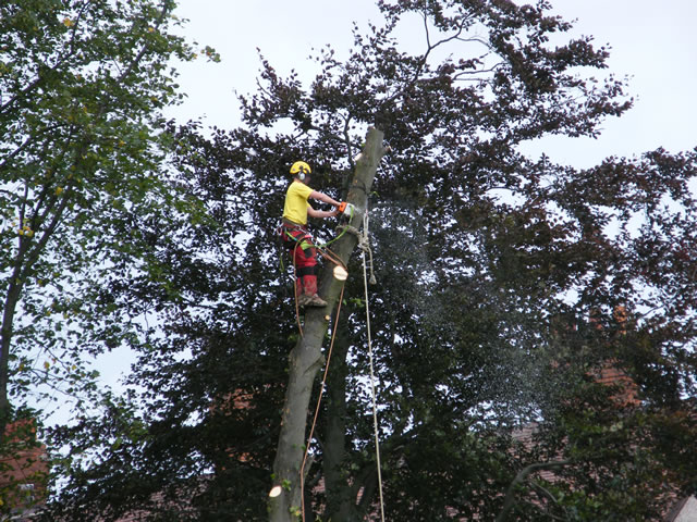 tree-dismantling-north-east