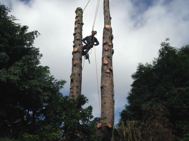 tree-removal-newcastle